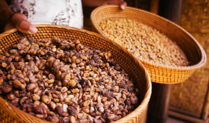 Kopi Luwak Kaffee in zwei Schalten