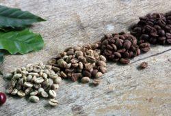 verschiedene kaffeebohnen nebeneinander röststufen kaffeekirschen