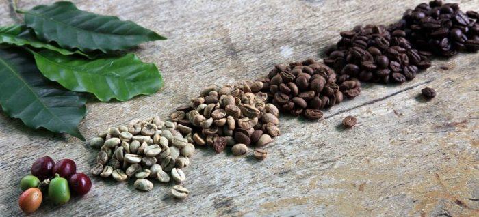 Frisch geerntete Kaffeebohnen liegen neben bereits gerösteten Kaffeebohnen der unterschiedlichen Röststufen.