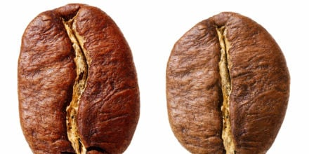 Vergleich Kaffeesorten Arabica Kaffeebohne und Robusta Kaffeebohne