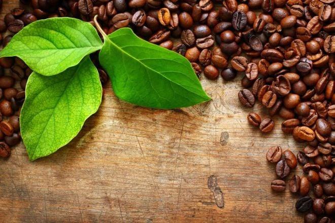 kaffeebohnen auf holztisch blätter kaffeesorten