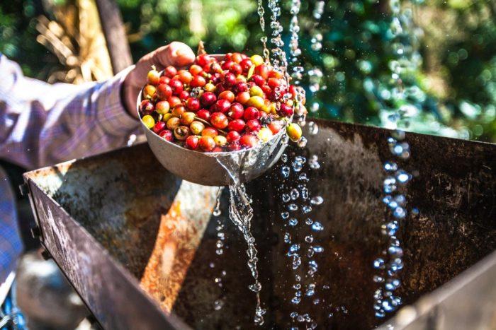 Kaffee Anbau Regenwald