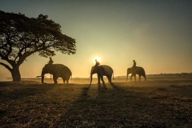 Elefanten-Kaffee