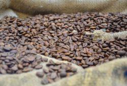 kaffeebohnen geröstet auf kaffeesack