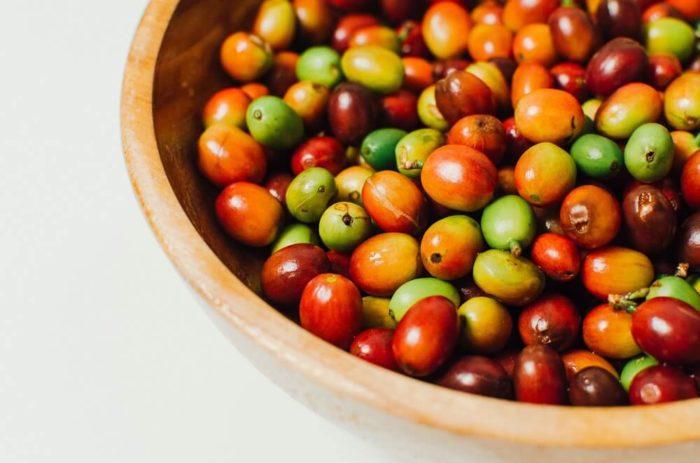 Vermehrung-der-kaffeepflanze-Kaffeekirschen