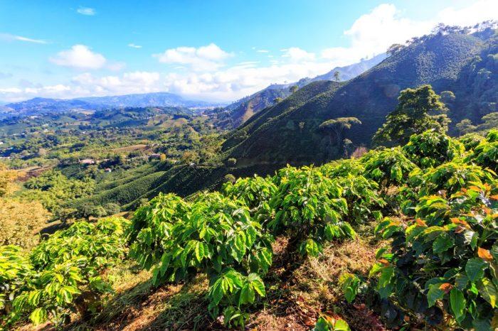 Kaffee-Anbaugebiete Brasilien
