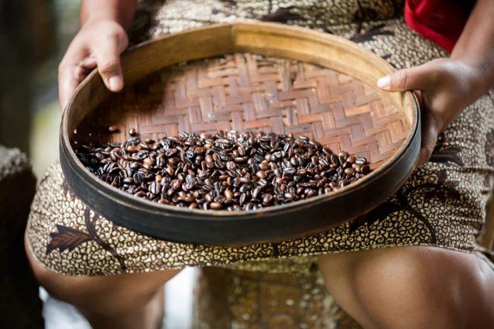 Katzenkaffee Kopi Luwak wird hergestellt