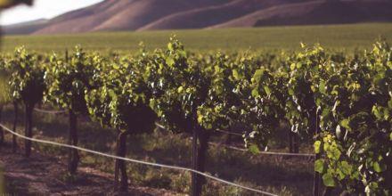 Weinanbau_hochsommer