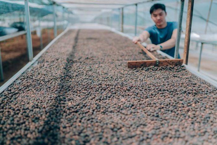 84 Coffee Vietnam Kaffeebohnen