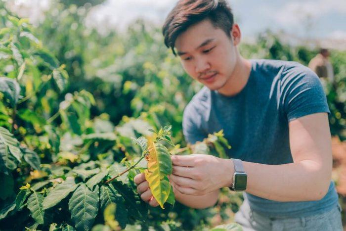 84 Coffee Qualitätskontrolle Vietnam